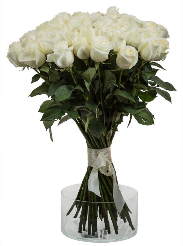 51 Элитная белая роза 70 см