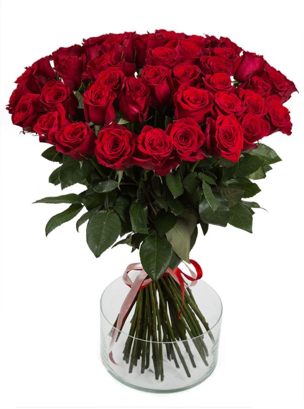 51 Элитная красная роза 70 см